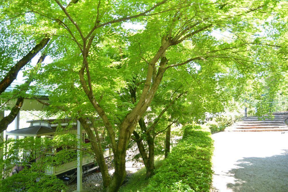 京都市電名古屋電停の新緑_e0373930_20450042.jpg