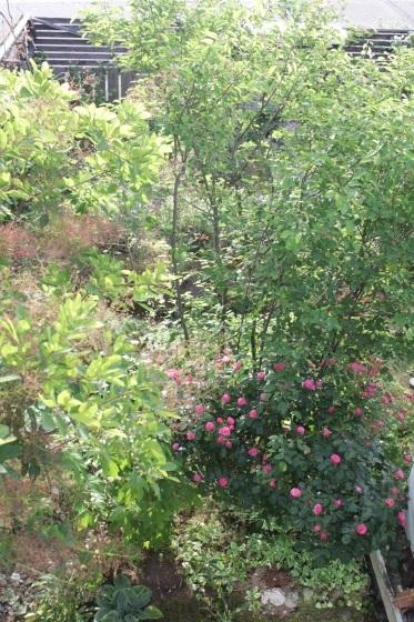花だらけ_b0132338_08275087.jpeg