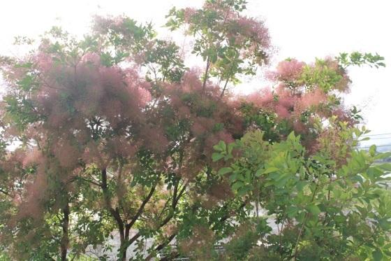 花だらけ_b0132338_08280720.jpeg
