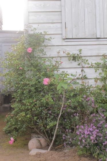花だらけ_b0132338_08284759.jpeg