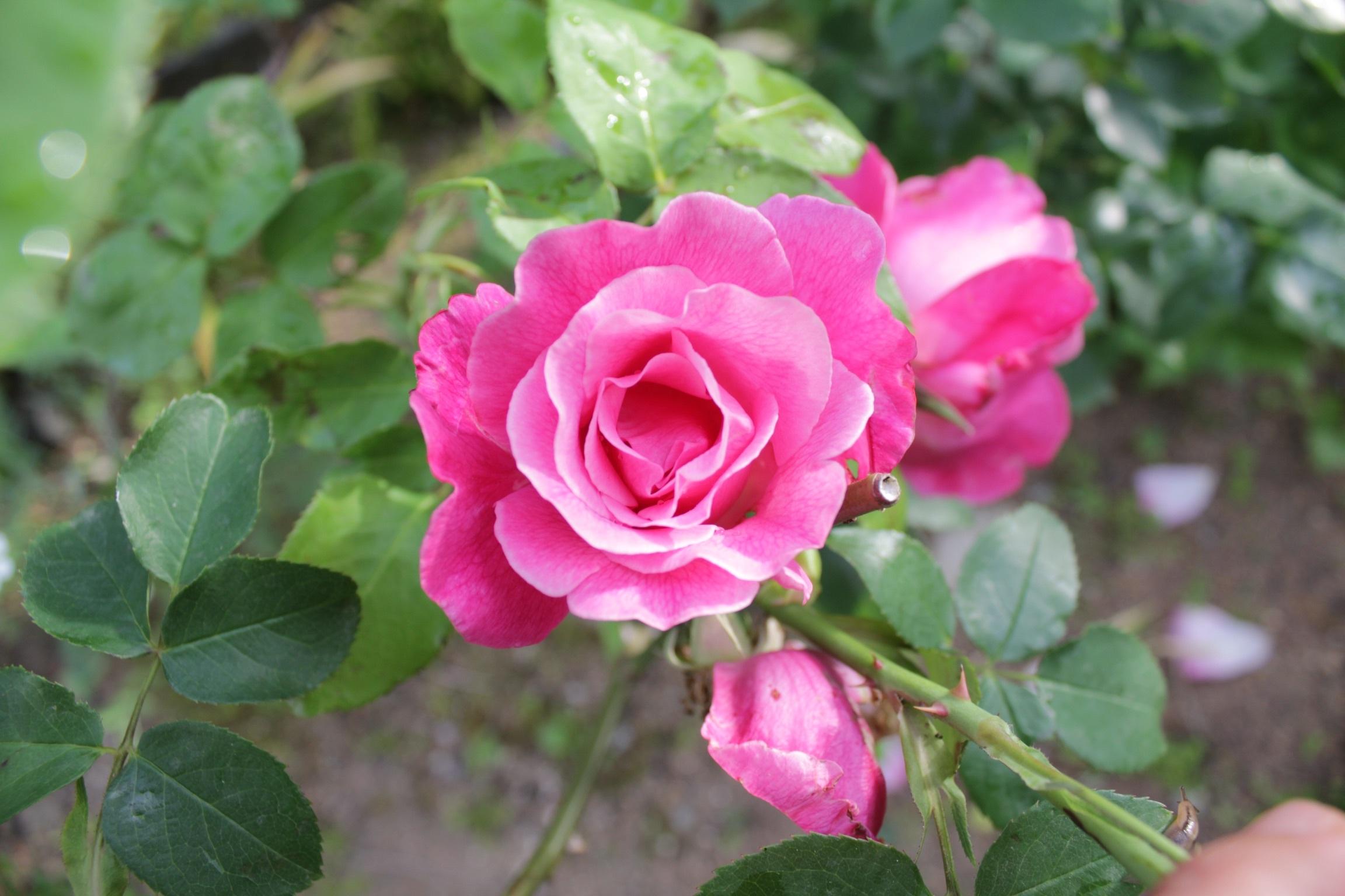 花だらけ_b0132338_08290449.jpeg