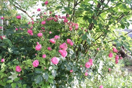 花だらけ_b0132338_08300504.jpeg