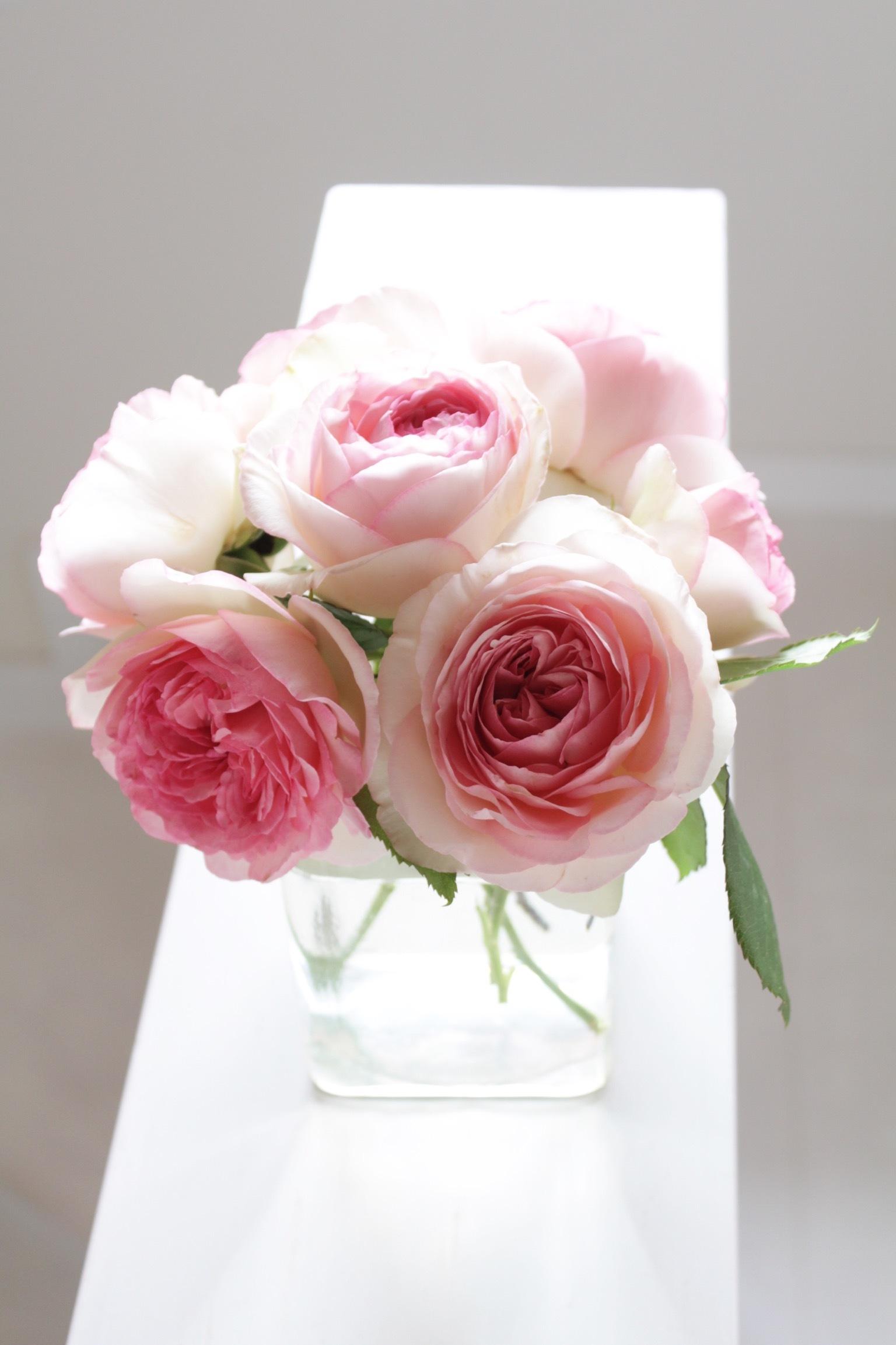 花だらけ_b0132338_08304174.jpeg