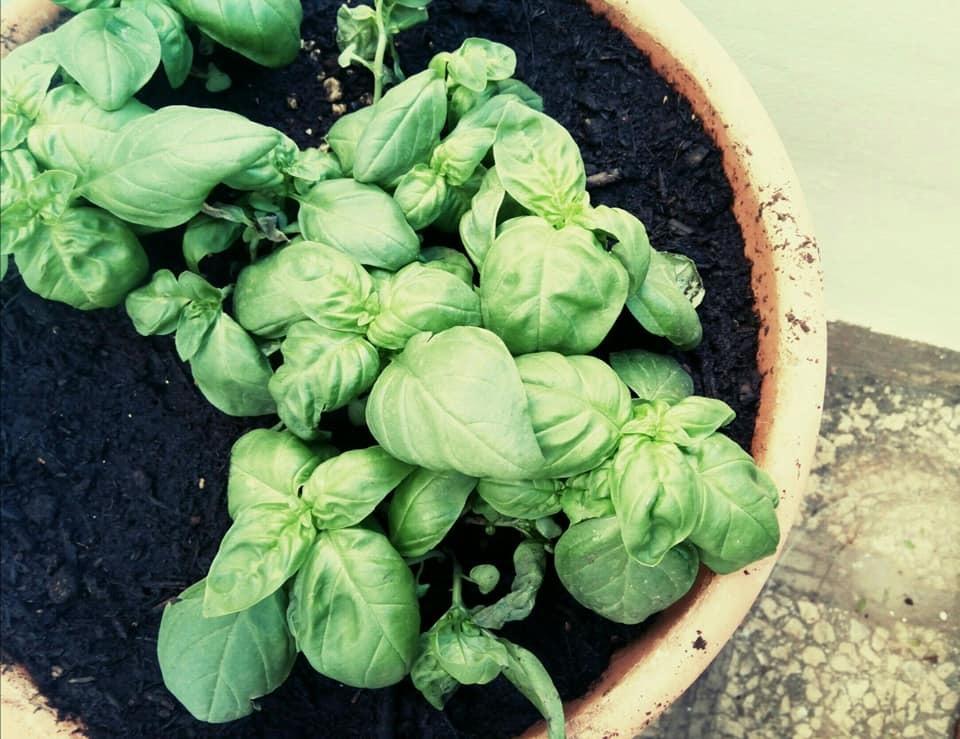 最近の野菜たち_b0305039_18460866.jpg