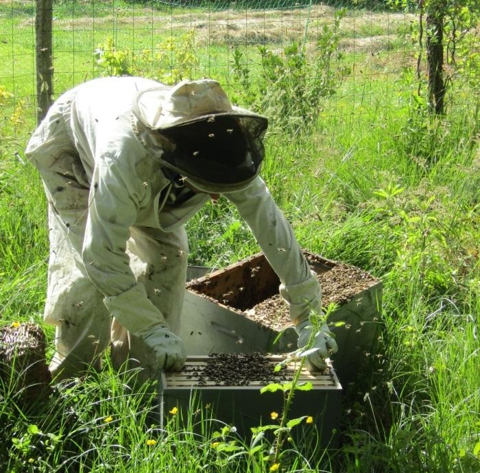 驚き 蜜蜂の引っ越し_b0287748_03455077.jpg