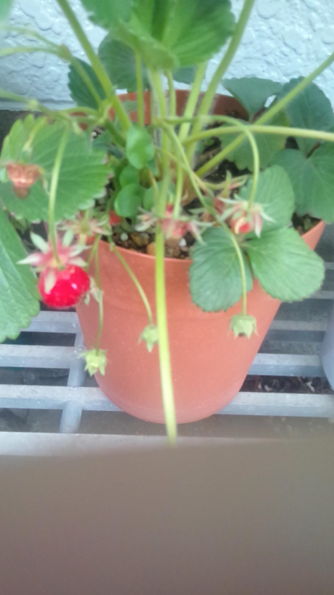 一粒の苺が・・_f0190056_22375370.jpg