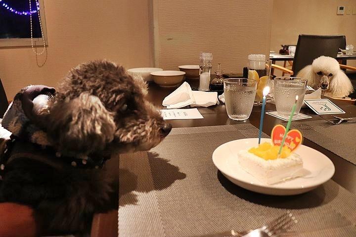 夕食とケーキととーちゃんの涙。【誕生日旅行7】_b0111376_14311759.jpg