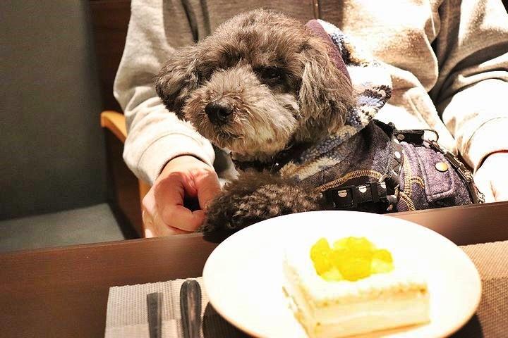 夕食とケーキととーちゃんの涙。【誕生日旅行7】_b0111376_15020241.jpg