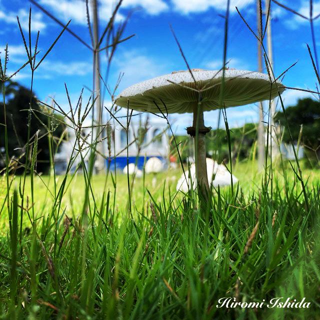 キノコ祭り_c0146596_06005166.jpeg