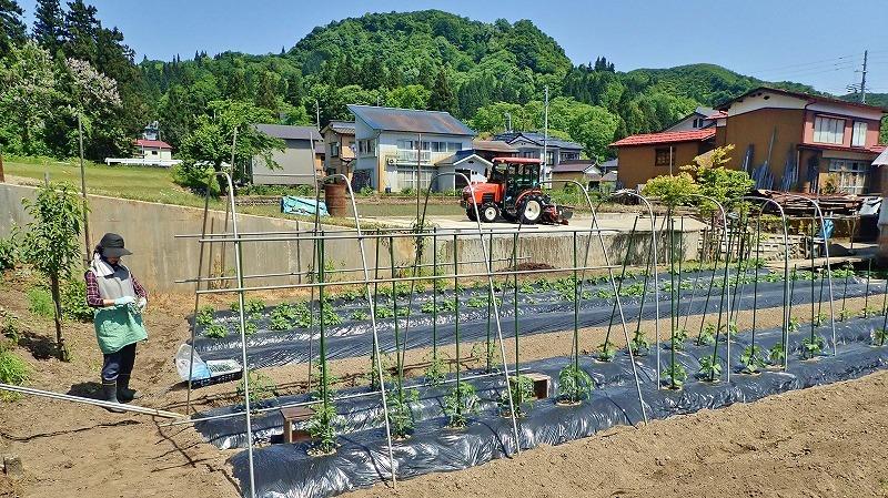 日曜日は家庭菜園で_c0336902_12332945.jpg