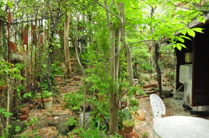 garden cruise,late May_f0188408_10172496.jpg