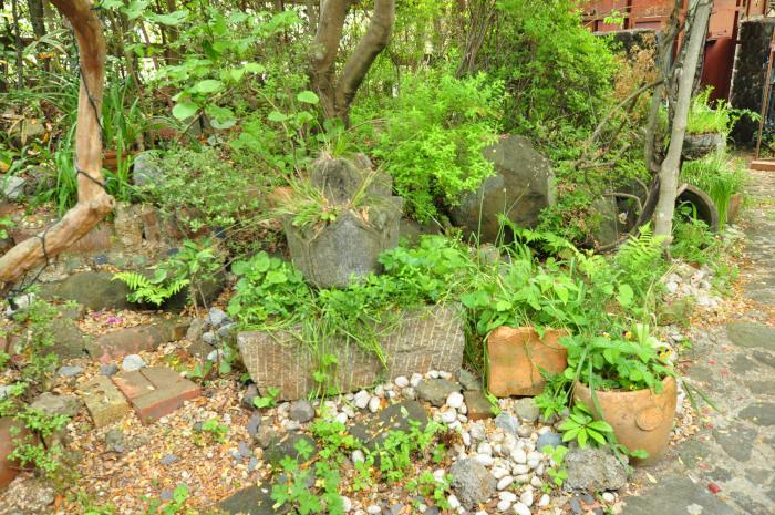 garden cruise,late May_f0188408_10194771.jpg