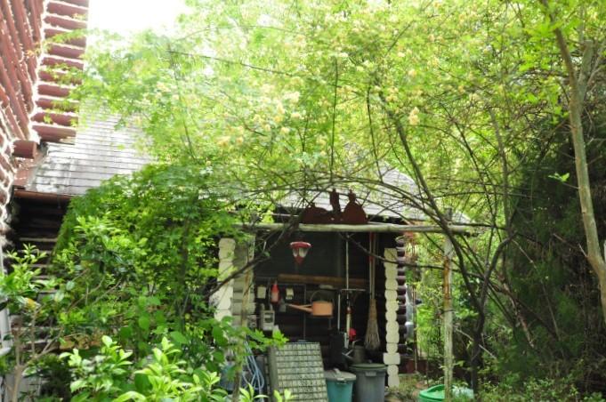 garden cruise,late May_f0188408_10351903.jpg