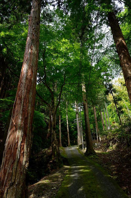 緑濃きお寺_f0032011_19060555.jpg