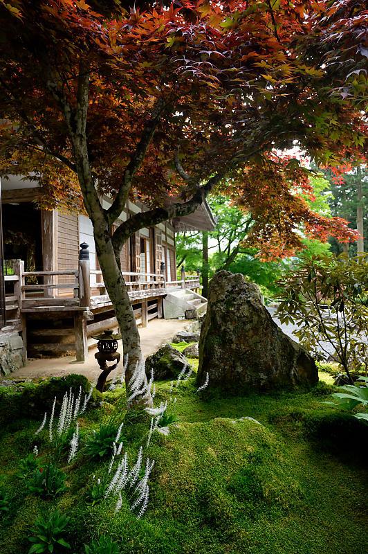 緑濃きお寺_f0032011_19060659.jpg