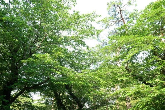 大宮公園に接し、風通しの良いカフェ店_d0150720_18265796.jpg