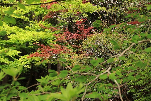 新緑の種まき権兵衛の里散歩(その2)(撮影:4月15日)_e0321325_15591198.jpg