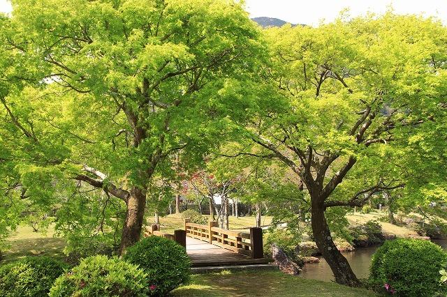 新緑の種まき権兵衛の里散歩(その2)(撮影:4月15日)_e0321325_15592319.jpg