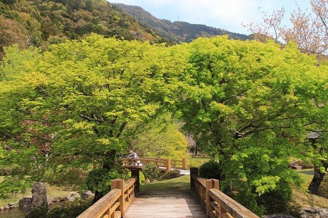 新緑の種まき権兵衛の里散歩(その2)(撮影:4月15日)_e0321325_15595662.jpg