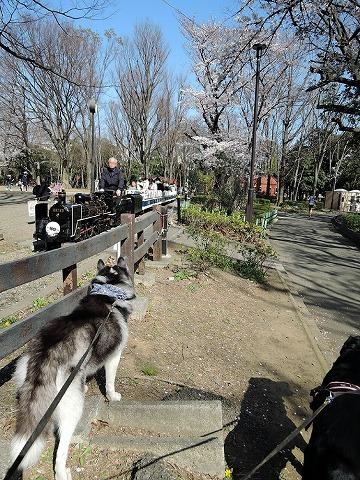 散歩屋日誌【43】_c0062832_15224656.jpg