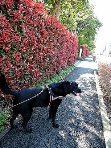 散歩屋日誌【43】_c0062832_15224746.jpg