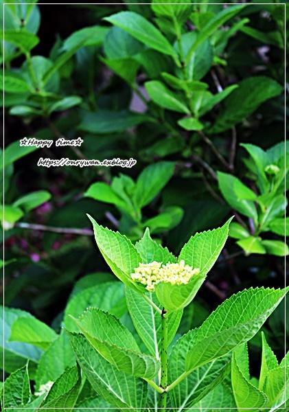 オムライス弁当と庭から~とことんハマるタイプです♪_f0348032_16300096.jpg