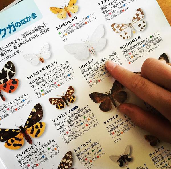 リモート昆虫観察_a0153850_11103738.jpeg