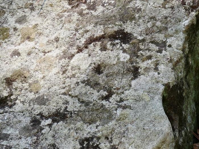 和歌山城石垣の刻印  2020-05-30 00:00     _b0093754_22582933.jpg