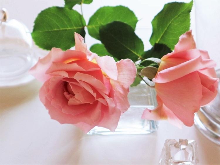 薔薇の季節_d0159066_21121474.jpg