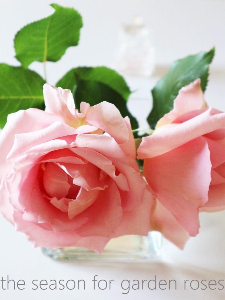 薔薇の季節_d0159066_21122096.jpg