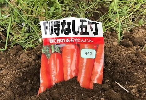 トウモロコシとニンジンの2回目の種蒔き5・26_c0014967_16394881.jpg