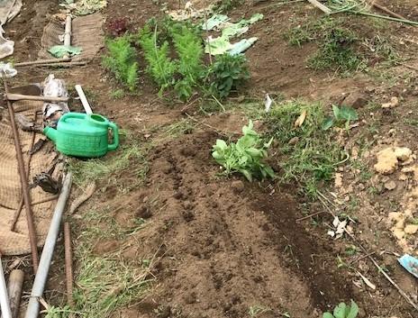 トウモロコシとニンジンの2回目の種蒔き5・26_c0014967_16421272.jpg