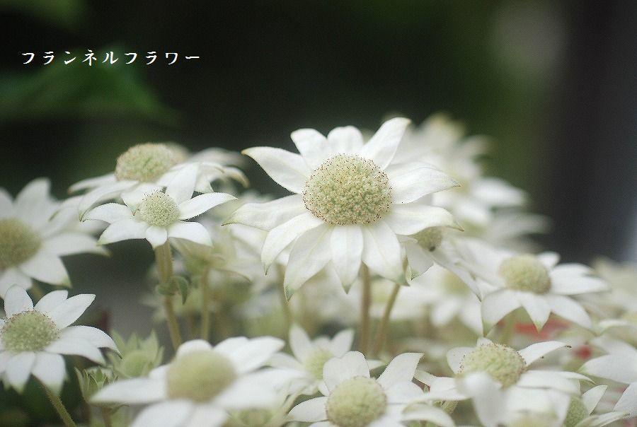 新たな朝_c0187781_17214767.jpg