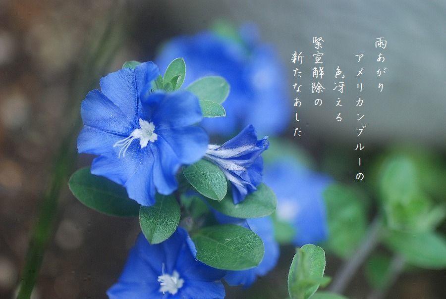 新たな朝_c0187781_18464834.jpg