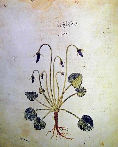 6世紀の植物画_c0084183_09231577.jpg