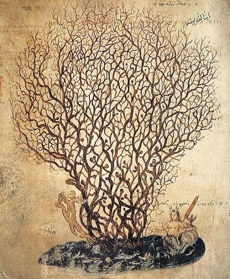 6世紀の植物画_c0084183_09552252.jpg