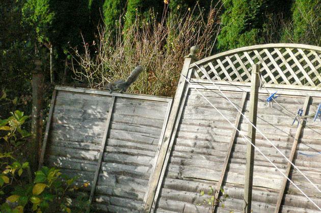 フェンスが壊れた時は_b0234690_09152721.jpg