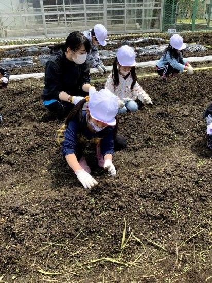 畑での学習(1年生)_d0162600_15100216.jpg
