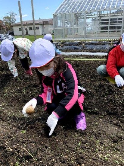 畑での学習(1年生)_d0162600_15101310.jpg