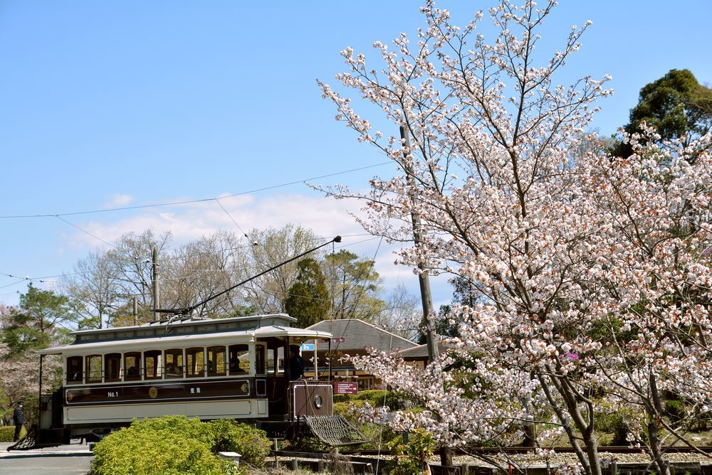 京都市電七条電停付近の桜 品川燈台寄り_e0373930_19351350.jpg