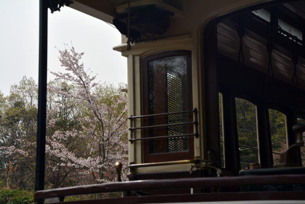 京都市電七条電停付近の桜 品川燈台寄り_e0373930_20015653.jpg