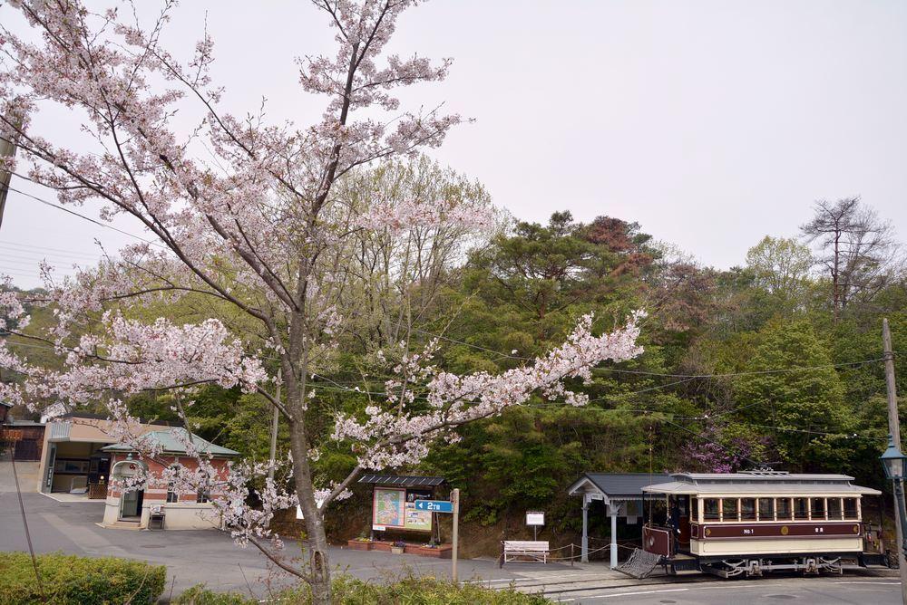 市電七条電停と桜 レンガ通り_e0373930_20015672.jpg