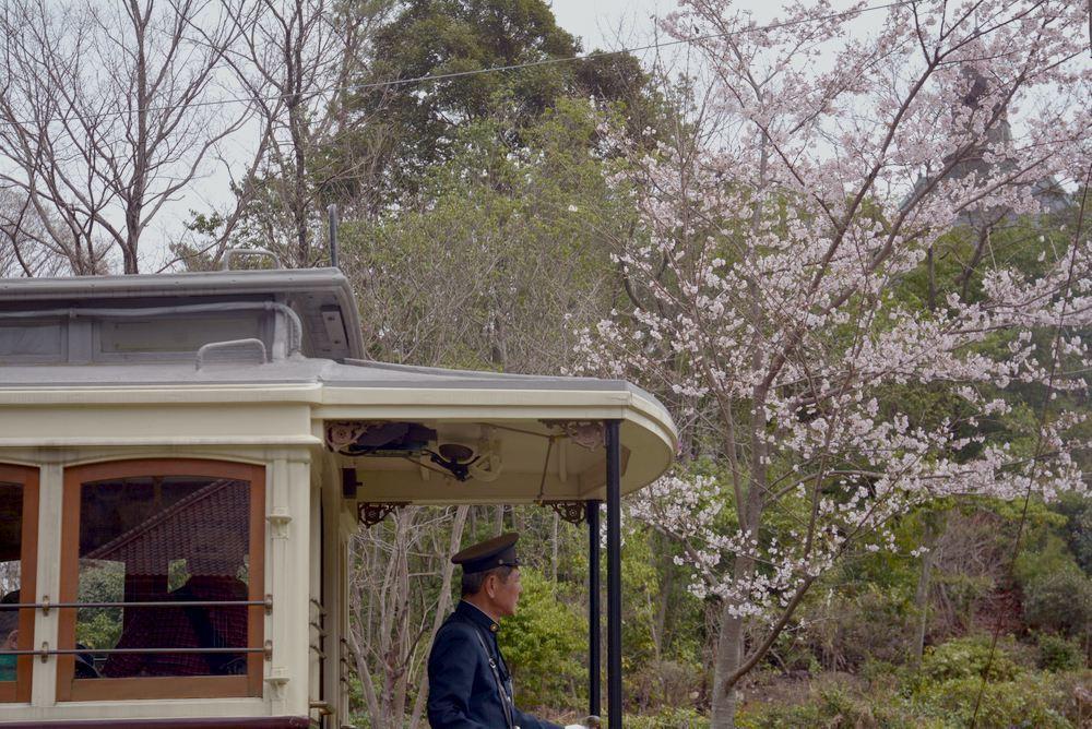 京都市電七条電停付近の桜 品川燈台寄り_e0373930_20034455.jpg