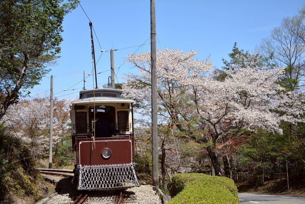 京都市電七条電停付近の桜1 ヤマザクラ_e0373930_20035658.jpg
