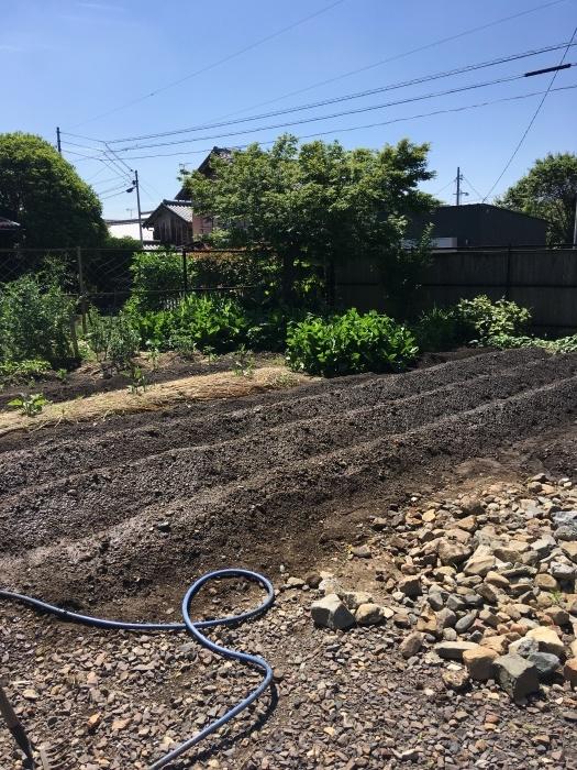 家の畑も畝立て_e0155231_21165155.jpeg