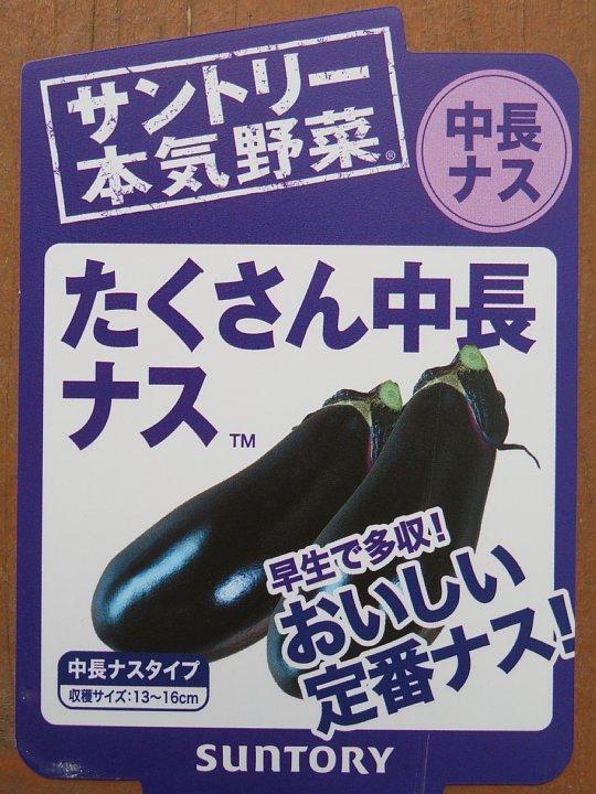 2020年6月3日 夏野菜づくりスタート  !(^^)!_b0341140_18155061.jpg