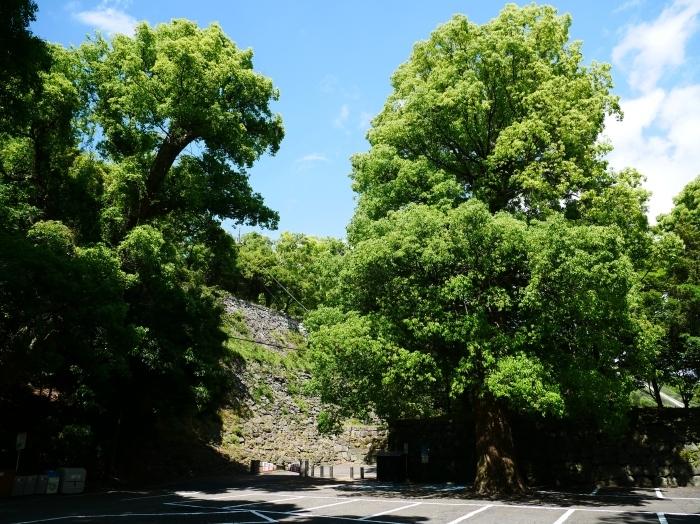 和歌山城公園にて  2020-06-01 00:00     _b0093754_20035877.jpg