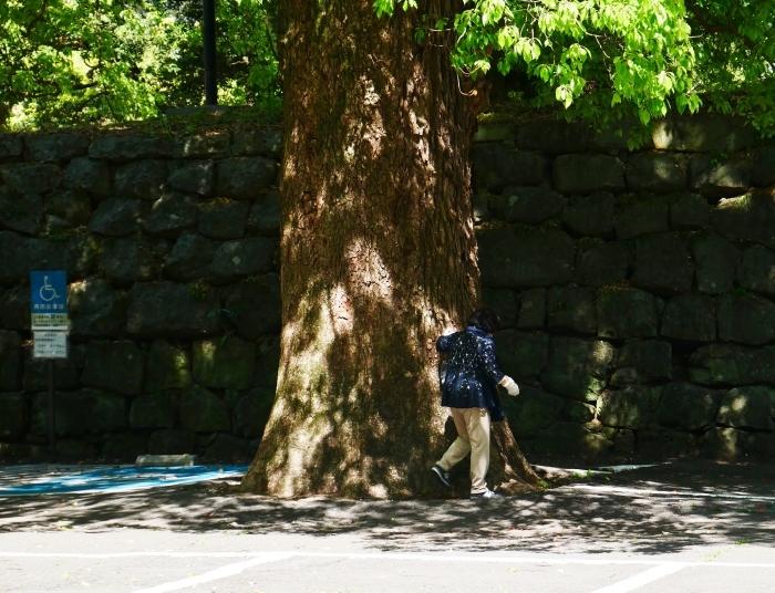 和歌山城公園にて  2020-06-01 00:00     _b0093754_20043203.jpg