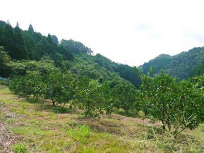 ザ・みかん みかんの花咲く様子(2020年)と春草を有機肥料に!!元気いっぱいの果樹で育てます!!_a0254656_14591069.jpg