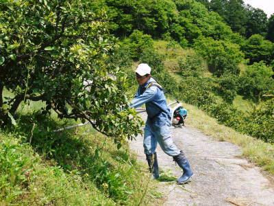 ザ・みかん みかんの花咲く様子(2020年)と春草を有機肥料に!!元気いっぱいの果樹で育てます!!_a0254656_15030557.jpg
